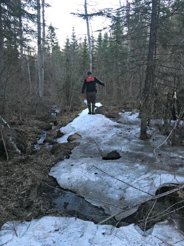 Missing Link Portage spring